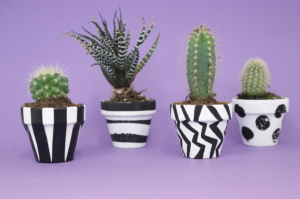 Four black and white plant pots on a purple background.